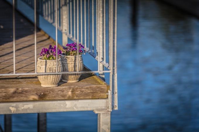 Plants On A Houseboast - Mabry Campbell
