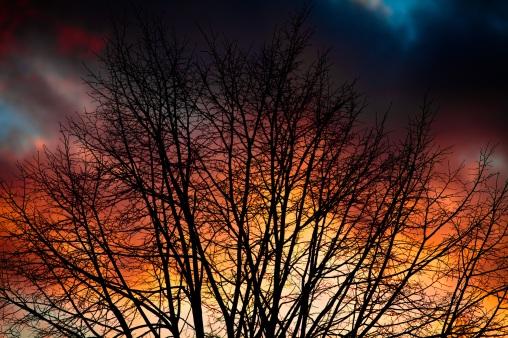 Ramlosa Sunset Silhouette - Mabry Campbell