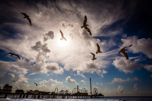 Swarming Gulls - Mabry Campbell