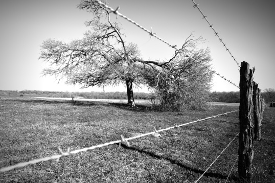Tornado Damaged Tree - Mabry Campbell