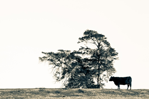 Tree In the Way - Mabry Campbell