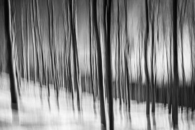 Winter Forest IX - Spacial Acoustics - Fine Art Photographer - Houston - Mabry Campbell