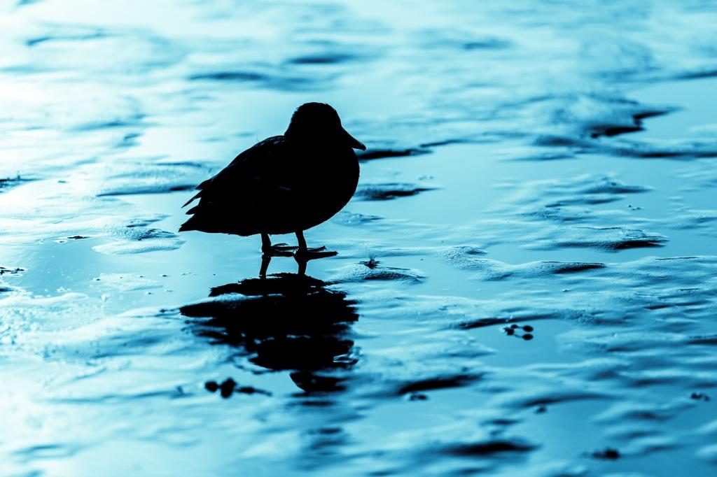 Bird-On-Ice-Mabry-Campbell