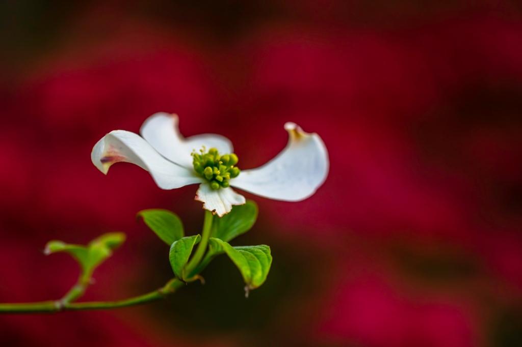 Flower On Merlot