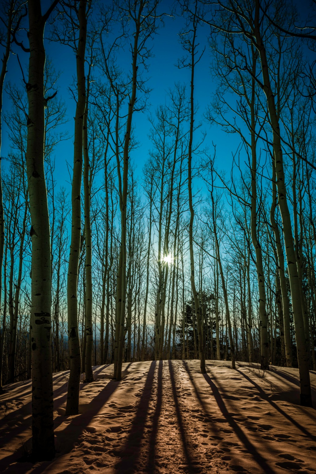 Backlight-Aspens-I-Mabry-Campbell