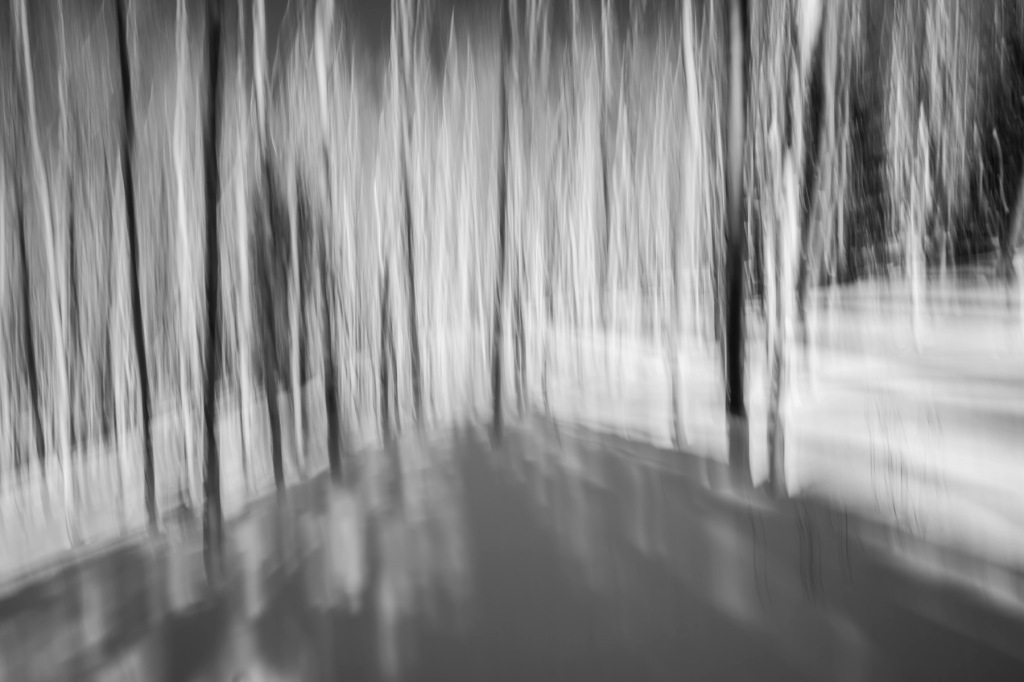 Winter Forest VI - Spacial Acoustics - Fine Art Photography - Houston - Mabry Campbell