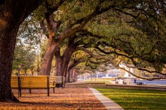 Beneath-Oak-Trees-Mabry-Campbell