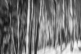 Winter Forest VII ~ Spacial Acoustics - Mabry Campbell