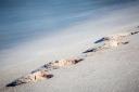 Footprints-On-A-Beach-II-Mabry-Campbell