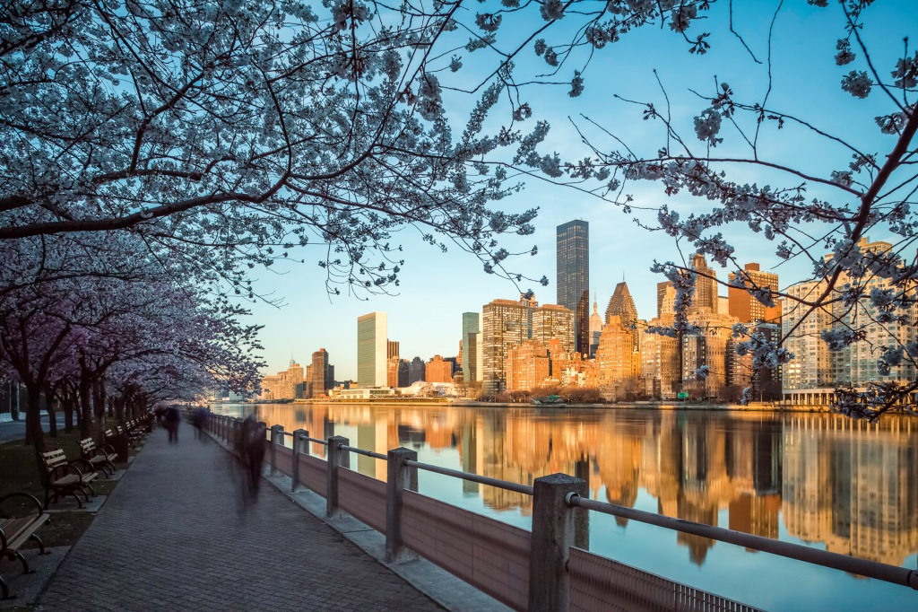 Strolling-Roosevelt-Island-Cherry-Blossom-Sunrise-Skyline-Mabry-Campbell