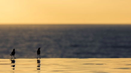 Birds-On-An-Infinity-Pool-Mabry-Campbell