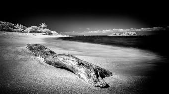 Driftwood-Along-Riviera-Narayit-Mabry-Campbell
