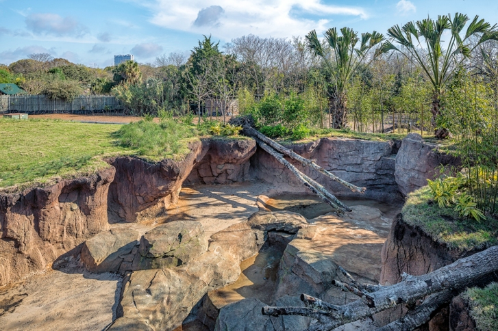 Gorilla-Exhibit-At-the-Houston-Zoo-March-2015-Mabry-Campbell-9