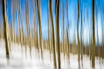 Pine-Trees-In-New-Mexico-Motion-Blur-Mabry-Campbell