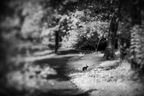 Rabbit-Off-the-Trail-Mabry-Campbell