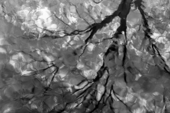 Reflections-of-A-Tree-Mabry-Campbell