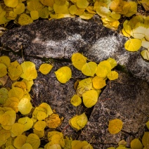 Aspen-Forest-Floor-No.-1---Tessa-Trail-Mabry-Campbell