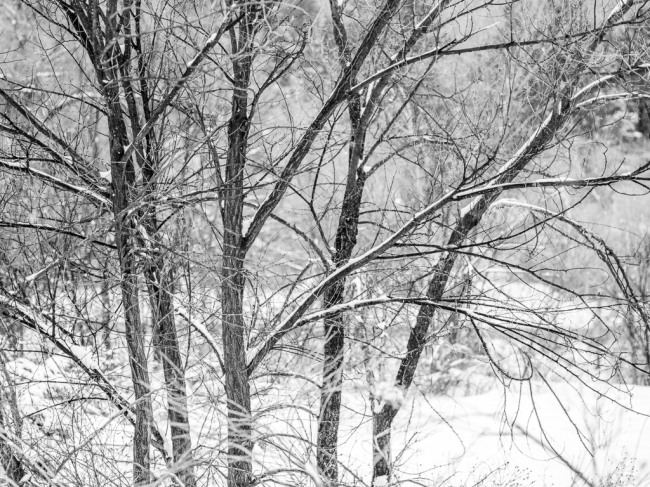 Frozen-Trees-Mabry-Campbell