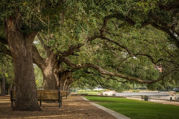 Hermann-Park-Oak-Trees-Mabry-Campbell