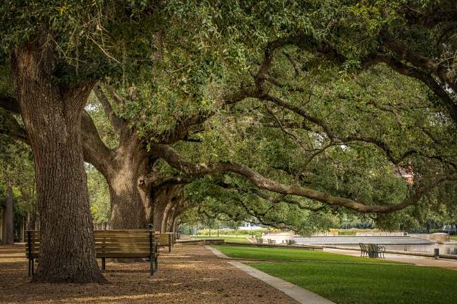 Hermann-Park-Oak-Trees-Mabry-Campbell