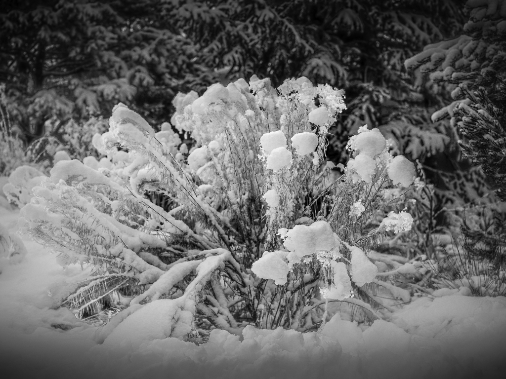 Landscaping-After-A-Snow-BW-Mabry-Campbell