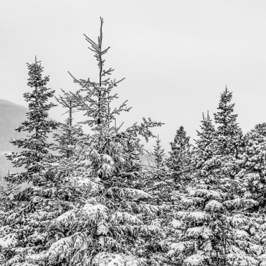 Snow-On-Pines-Mabry-Campbell