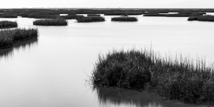 Wetlands-Mabry-Campbell