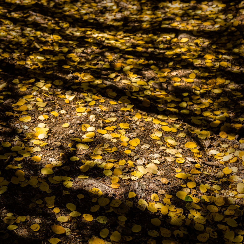 Aspen Forest Floor No. 10 - Tessa Trail