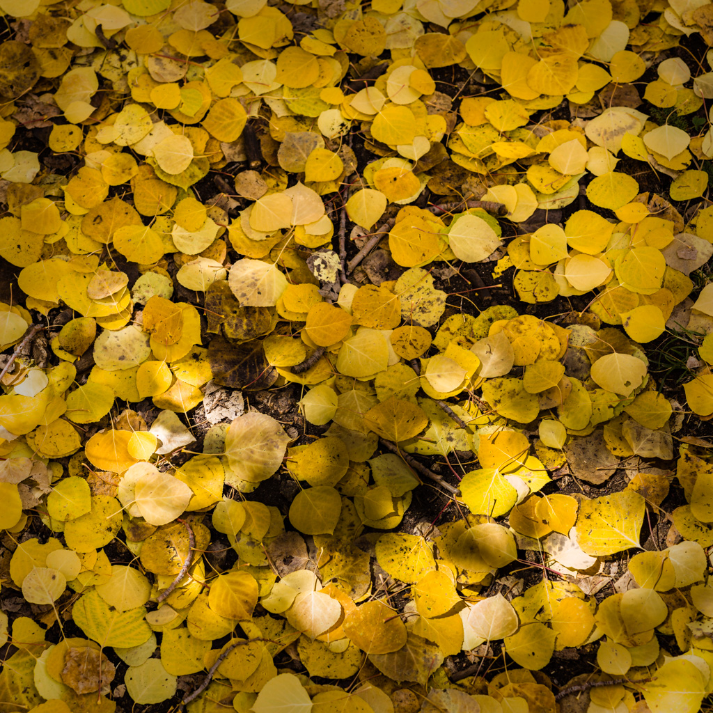 Aspen Forest Floor No. 11 - Tessa Trail