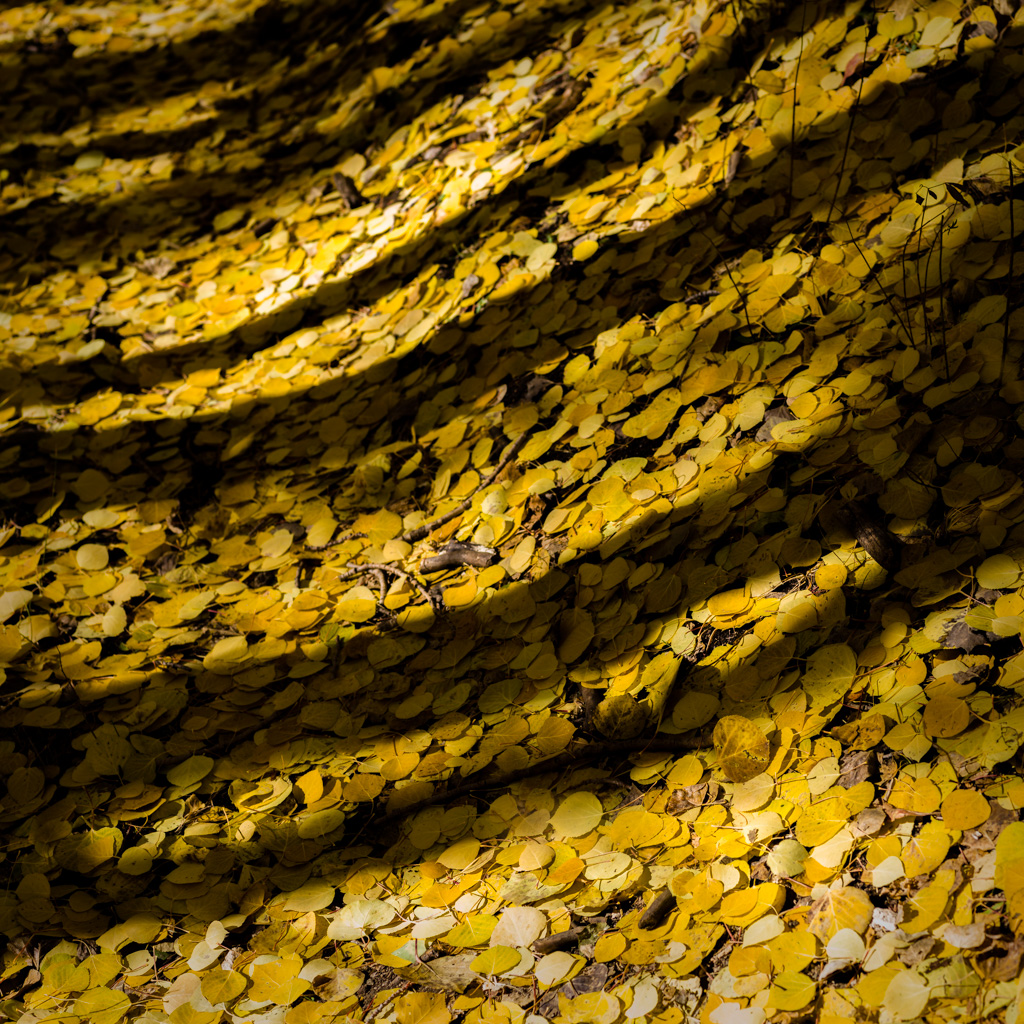 Aspen Forest Floor No. 12 - Tessa Trail