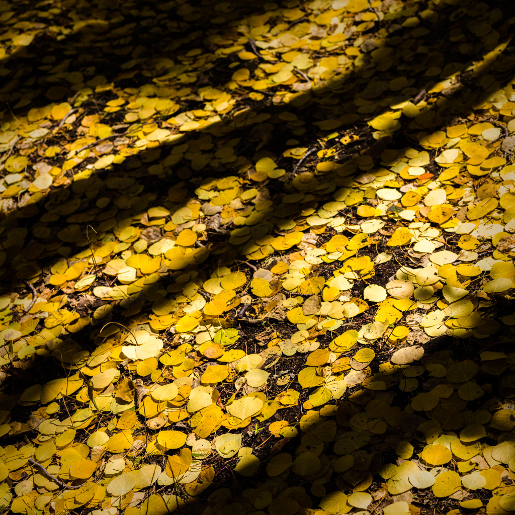 Aspen Forest Floor No. 3 - Tessa Trail