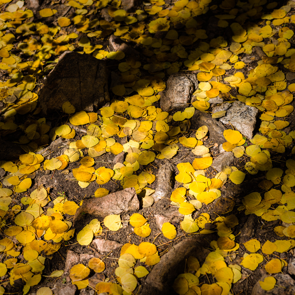 Aspen Forest Floor No. 5 - Tessa Trail