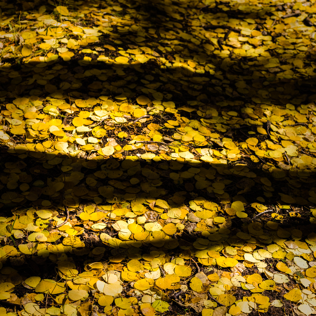 Aspen Forest Floor No. 7 - Tessa Trail