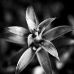 Nayarit-Flower-Mabry-Campbell