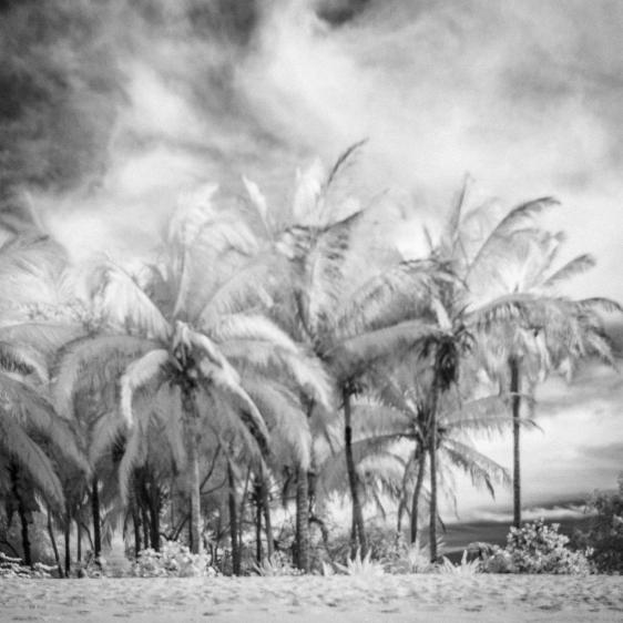 Palm-Trees-Nayarit-Mabry-Campbell