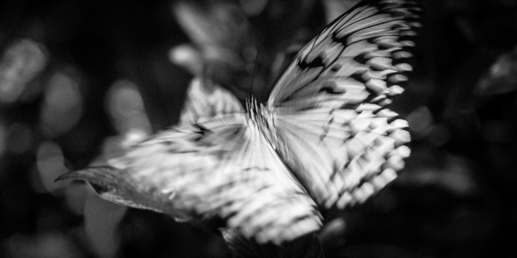 Rice-Paper-Butterfly-Mabry-Campbell
