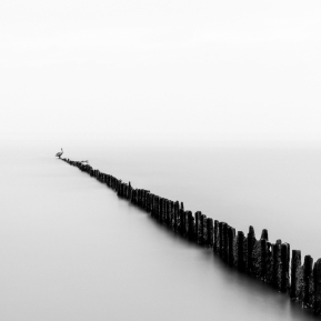 Texas-City-Dike---Pelican-In-Fog-Mabry-Campbell