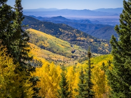Fall-in-Santa-Fe-National-Forest-Mary-Campbell