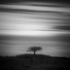 Tree-Along-2810-Mabry-Campbell