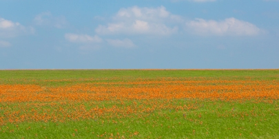 Field-of-Indian-Paintbrush-Mabry-Campbell