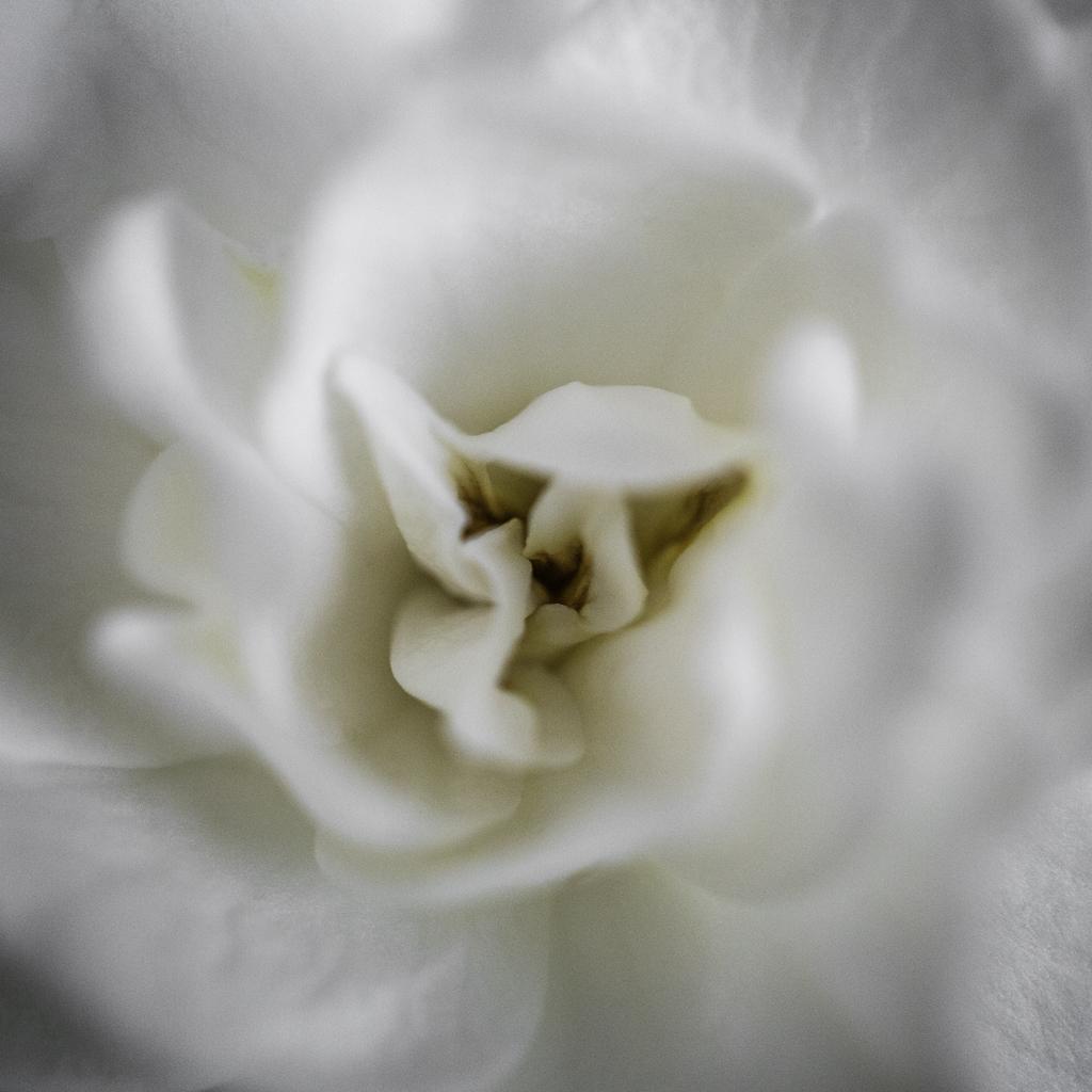 Gardenia-Mabry-Campbell
